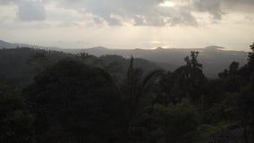 Tropikalna lasowa zmierzch dżungla, natura drzewna, tropikalny, środowisko, tło, landscap zbiory wideo