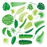 Tropikalna liść kolekcja, odizolowywa wektor Duży set Fotografia Stock