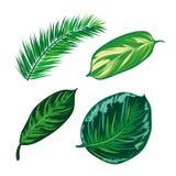 Tropikalna liść kolekcja, odizolowywa wektor Set Obrazy Royalty Free
