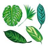 Tropikalna liść kolekcja, odizolowywa wektor Set Fotografia Stock