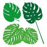Tropikalna liść kolekcja, odizolowywa wektor Set Fotografia Royalty Free