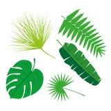 Tropikalna liść kolekcja, odizolowywa wektor Set Obrazy Stock