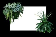 Tropikalna liść natury granica, ulistnienie rośliny krzak Monstera, fer Fotografia Royalty Free