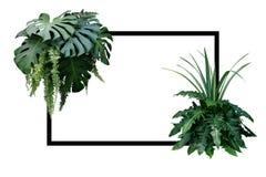 Tropikalna liść natury granica, ulistnienie rośliny krzak Monstera, fer Fotografia Stock