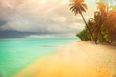 Tropikalna linia brzegowa z drzewkami palmowymi Obraz Royalty Free