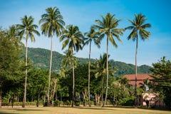 Tropikalna miejscowość wypoczynkowa z zielonymi palmami Obrazy Royalty Free