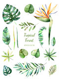 Tropikalna Obfitolistna kolekcja Handpainted akwareli kwieciści elementy Akwarela liście, gałąź, kwiat ilustracja wektor