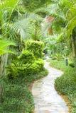 tropikalna ogrodowa ścieżka zdjęcie royalty free