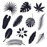 Tropikalna palma Opuszcza Czarne sylwetki Ustawia wektor ilustracji