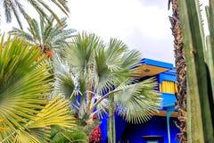 Tropikalna palma opuszcza, kwiecisty deseniowy t?o, fotografia zdjęcia stock