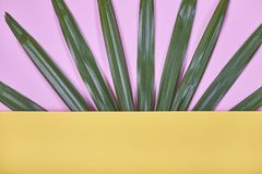 Tropikalna palma opuszcza na pastelowym koloru żółtego i menchii tle zdjęcia royalty free