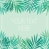 Tropikalna palma opuszcza tło szablon Zdjęcia Stock