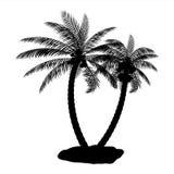 Tropikalna palmowa sylwetka Zdjęcie Stock