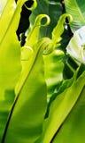 Tropikalna paprociowa roślina Fotografia Royalty Free
