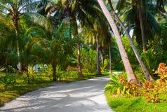 tropikalna parkowa droga przemian Fotografia Stock