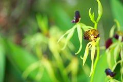 Tropikalna piękna orchidea Zdjęcia Stock