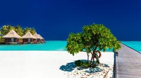 Tropikalna piaskowata plaża z wodden jetty nad wodnymi willami i Zdjęcie Royalty Free