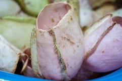 Tropikalna picther roślina zdjęcia royalty free