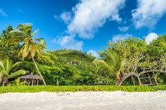 Tropikalna plaża i drzewa przeciw pięknemu niebieskiemu niebu Wakacyjny przeciw Obrazy Royalty Free