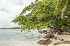 Tropikalna plaża przy Seychelles - natury tło Zdjęcie Royalty Free