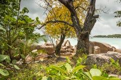 Tropikalna plaża przy Seychelles - natury tło Fotografia Royalty Free