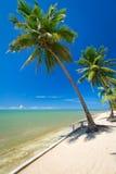 Tropikalna plaża z drzewkami palmowymi Zdjęcie Stock