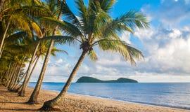 Tropikalna plaża z drzewkami palmowymi Obrazy Royalty Free