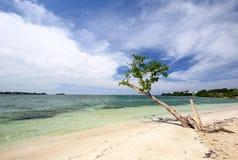 Tropikalna plaża z jałowym zielonym niebieskim niebem i drzewem Obrazy Stock