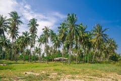 Tropikalna plaża z kokosowymi drzewkami palmowymi Fotografia Stock