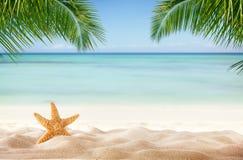 Tropikalna plaża z różnorodnymi skorupami w piasku Obrazy Royalty Free