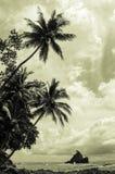 Tropikalna plaża - Costa Rica Zdjęcia Stock