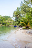 tropikalna plażowa kokosowa palma Zdjęcia Royalty Free