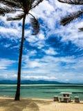 Tropikalna plaża z drzewkami palmowymi Zdjęcia Stock