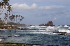 Tropikalna plaża z drzewkami palmowymi i ocean w Sri Lanka Zdjęcia Stock