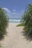 tropikalna plaża z drzewkami palmowymi i oceanem Obrazy Royalty Free