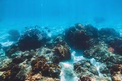 Tropikalna podwodna przyroda z koralami Denny życie w oceanie indyjskim Zdjęcia Stock