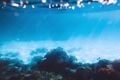 Tropikalna przyroda z koralami i słońce promieniami Denny życie w oceanie indyjskim Zdjęcia Royalty Free