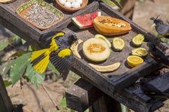 Tropikalna ptasia karmienie stacja zdjęcie stock