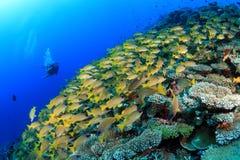 Tropikalna rafa koralowa Zdjęcia Royalty Free