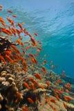 tropikalna rafowa scena Fotografia Royalty Free