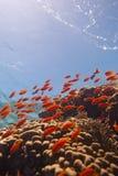 tropikalna rafowa scena Obraz Royalty Free