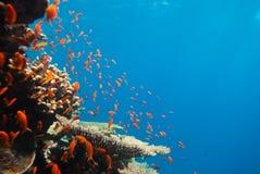 tropikalna rafowa scena Obraz Stock