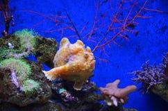 Tropikalna rafy koralowa ryba Zdjęcia Stock