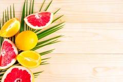Tropikalna rama dla teksta na drewnianym tle Fotografia cytrusy i palmowy liść z przestrzenią dla teksta Pomarańcze, grapefruitow zdjęcie royalty free