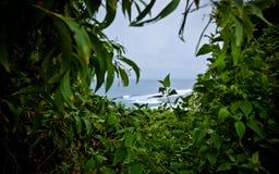 Tropikalna roślinność i ocean Fotografia Royalty Free