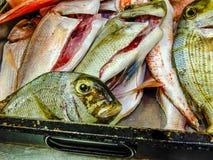 Tropikalna ryba Zdjęcia Royalty Free