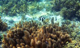 Tropikalna ryba i pogodna rafa koralowa Podmorska krajobrazowa fotografia Obrazy Stock