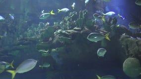 Tropikalna Rybia rafa koralowa zbiory