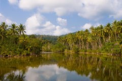 Tropikalna rzeka z drzewkami palmowymi Obrazy Royalty Free