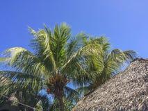 Tropikalna scena przy Granada ` s wyspami Zdjęcia Stock
